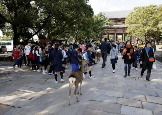 Deer in Japan's Nara died with numerous plastic bags in stomach – Japan Today
