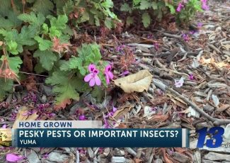 Home Grown: Pesky pests or important insects? – KYMA